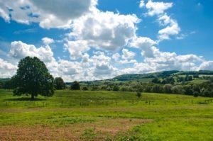 樹木、牧場などの周辺での散骨